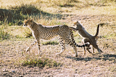 30.08.1993<br />Safari in Kenia